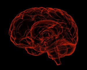 introduction to brain activity